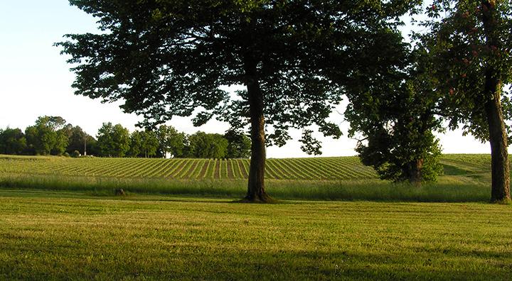 Esprit château Malfard, vin de bordeaux rouge et blanc